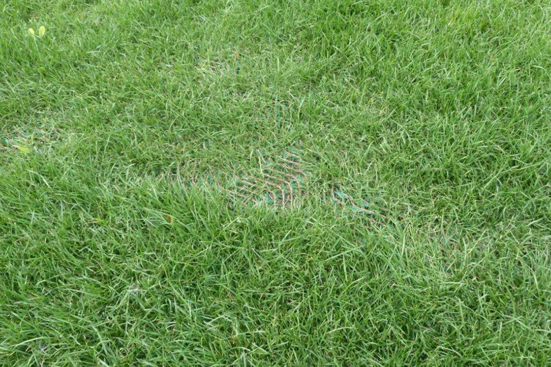 SureFlex Grass